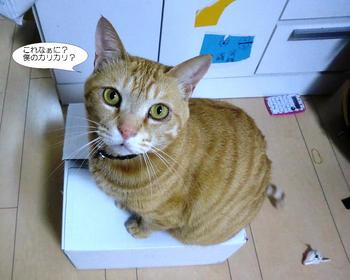 編集_blog 010.JPG